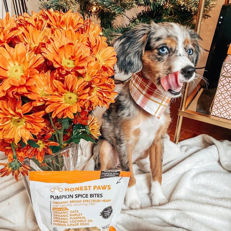 CBD For Dogs 1